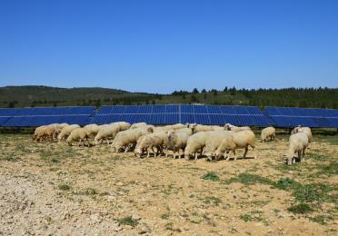 moutons panneaux photovoltaiques panneaux solaires total quadran paturages