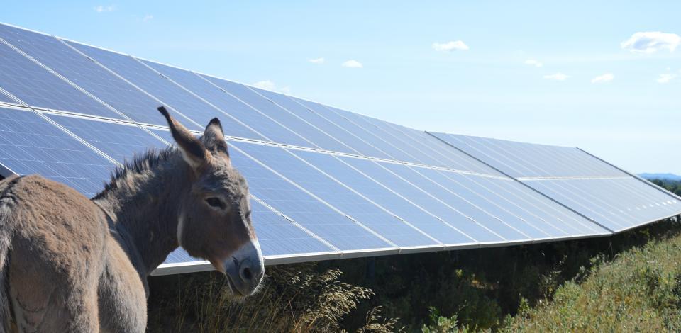 ane devant panneaux photovoltaics